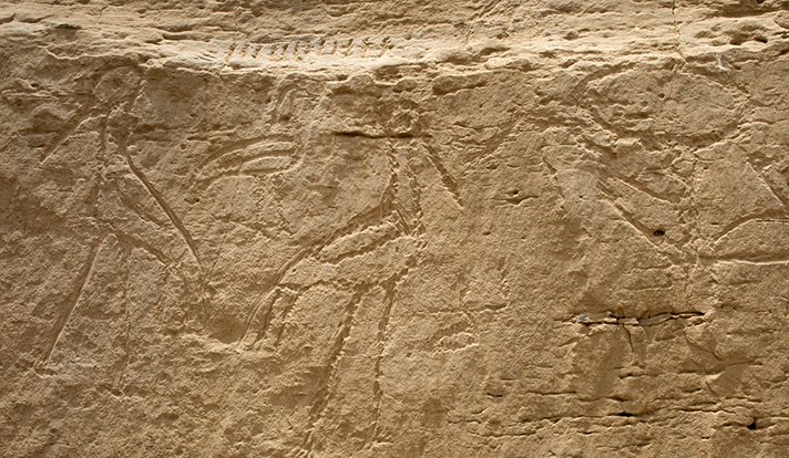 Sztuka naskalna odkryta w El-Khawy, fot. Uniwersytet w Yale